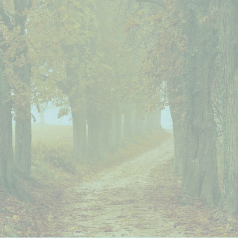 7 ayurvedic self care practices for autumn
